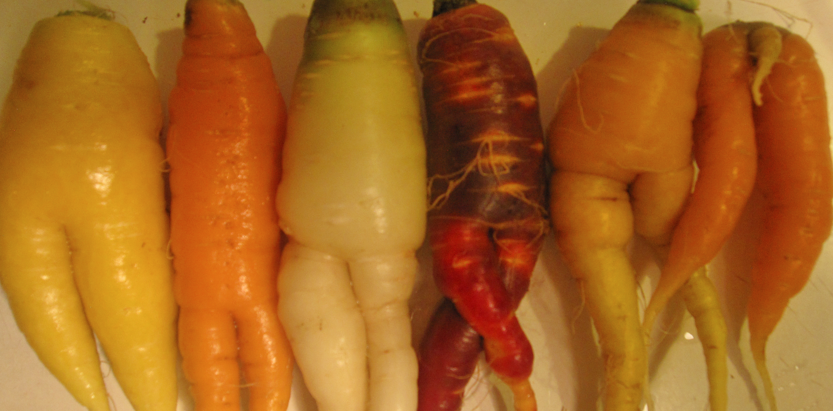 carrots with legs copy