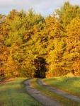 road_fall